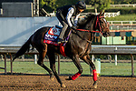 ARCADIA, CA  OCTOBER 30: Breeders' Cup Sprint entrant Hog Creek Hustle, trained by Vickie L. Foley, exercises in preparation for the Breeders' Cup World Championships at Santa Anita Park in Arcadia, California on October 30, 2019.  (Photo by Casey Phillips/Eclipse Sportswire/CSM)