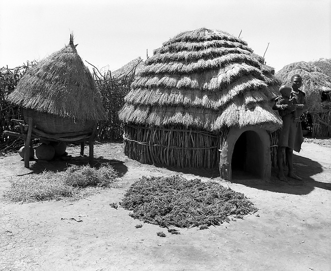 Karamoja, Uganda , Africa. - Village hut and sorgum harvest