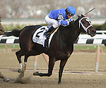 Wedding Toast with Javier Castellano aboard wins the 64th running of the Grade III Comely Stakes for 3-year olds fillies, going 1 1/8 mile at Aqueduct Racetrack. Trainer Kiaran McLaughlin.  Owners Godolphin Racing LLC.