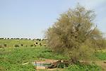 Ein Ulam in Yavniel Heights