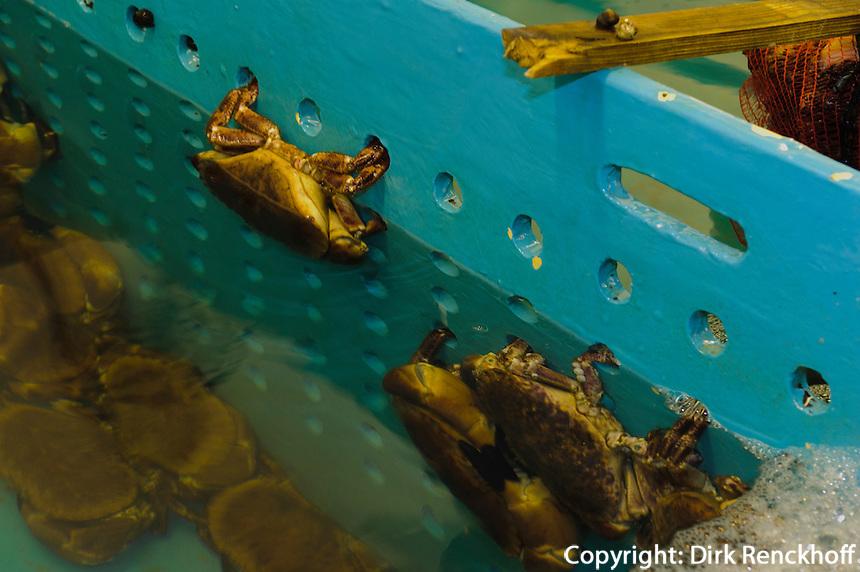 Faulkner Fisheries in altem Bunker, nördliche St. Quen's Bay, Insel Jersey, Kanalinseln