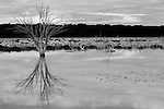 Kangaroo Island reflecting the beauty of nature in black and white
