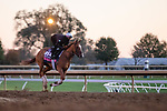 November 4, 2020: Editor At Large, trained by trainer Chad C. Brown, exercises in preparation for the Breeders' Cup Juvenile Fillies Turf at Keeneland Racetrack in Lexington, Kentucky on November 4, 2020. Gabriella Audi/Eclipse Sportswire/Breeder's Cup/CSM