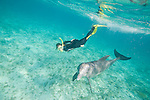 Grand Bahama Island, The Bahamas; a woman snorkling with a Common Bottlenose Dolphin (Tursiops truncatus) underwater