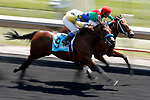 August 10, 2019 : Nicely Nicely (top), ridden by Jermaine Bridgmohan, wins an undercard race ahead of Fast Dreamer, ridden by Mitchell Murrill, during Arlington Million Day at Arlington International Racecourse in Arlington Heights, Illinois. Jon Durr/Eclipse Sportswire/CSM