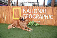 """LOS ANGELES - JULY 30: Finn Bodey attends the premiere event for National Geographic's """"Cesar Millan: Better Human, Better Dog"""" at the Westfield Century City Mall Atrium on July 30, 2021 in Los Angeles, California. (Photo by Stewart Cook/National Geographic/PictureGroup)"""