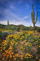 Colorful Desert - Arizona