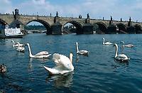 Tschechien, Prag, Blick von Kampainsel auf Karlsbrücke, Unesco-Weltkulturerbe