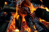 GERMANY, Plau, forest, bonfire with firewood / DEUTSCHLAND, Plau, Wald, Lagerfeuer mit Feuerholz