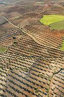 olive groves Aerial views farmland, La Mancha, near Algodor and Ocana, Toledo, Spain