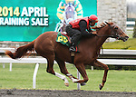 April 03, 2014: Hip 86 Kitten's Joy - Cherokee Melody consigned by de Meric Sales worked 1/4 in 21:1 .  Candice Chavez/ESW/CSM