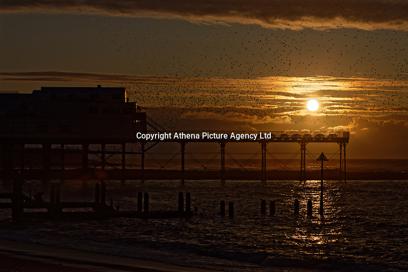 A starlings murmuration taking place during sunset over the pier in Aberystwyth, Wales, UK. Sunday 03 November 2019
