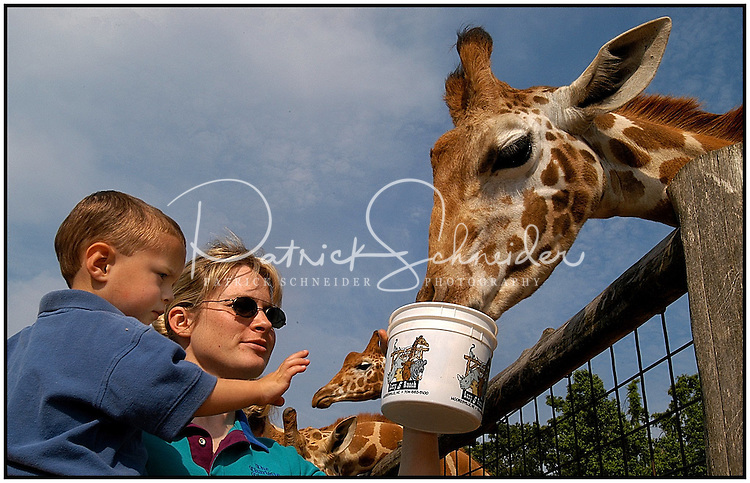 A young boy is uncertain as he and his mother feed a giraffe at the Lazy Five Ranch in Mooresville, NC. Lazy 5 Ranch is a privately owned exotic animal drive through park and safari in Iredell County, NC.