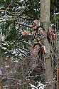00105-050.16 Bowhunting:  Archer in tree stand is well camouflaged as he hunts on cold day after recent snow fall.  Hunt, winter, late season, spruce.