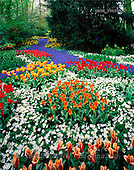 Tom Mackie, FLOWERS, photos, Spring Garden, Keukenhof Gardens, Lisse, Holland, GBTM990354-2,#F# Garten, jardín