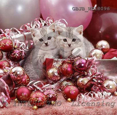 Kim, CHRISTMAS ANIMALS, photos, GBJBWP18096,#XA# ,puzzles