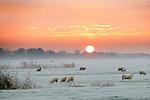 Foto: VidiPhoto<br /> <br /> HOMOET – En toen was Nederland opeens wit. In de Betuwe zelfs spierwit maandagmorgen, dankzij de eerste –en voorlopig laatste- serieuze nachtvorst van deze herfst. Voor grote delen van ons land werd zelfs code geel afgekondigd vanwege gladheid. Aan de andere kant leverde het fotografisch mooie plaatjes op rond zonsopgang en net voordat mist op veel plekken het zicht flink terugbracht, zoals hier in het Betuwse buurtschap Homoet. Foto: Vrijwel alleen schapen en jongvee loopt nog buiten.