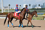 Social Inclusion was a clear winner over Honor Code and set a new track record in the process in a 3 year old allowance at Gulfstream Park, Hallandale Beach Florida. 03-12-2014