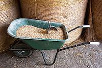 Pozzallo frazione di Romagnese (Pavia). Cooperativa Agricola Canedo: allevamento semibrado di bovini da carne. Fieno e una carriola con mangime composto da cereali e fave --- Pozzallo Romagnese (Pavia). Canedo Agricultural Cooperative: semi-wild breeding of beef cattle. Hay and a wheelbarrow with fodder consisting of cereals and fava beans
