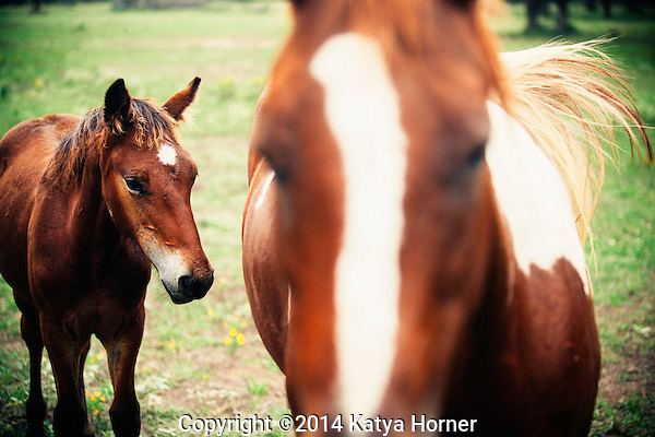 A couple of horses, seen roadside, while driving between Houston and Dallas, Texas.