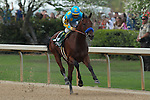 April 11, 2015: American Pharoah with jockey Victor Espinoza aboard coming down the final stretch of the Arkansas Derby at Oaklawn Park in Hot Springs, AR. Justin Manning/ESW/CSM