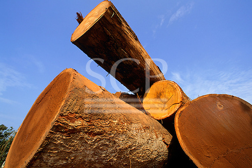 Mato Grosso, Amazon, Brazil. Hardwood rainforest tree trunks in a pile in an illegal timber sawmill yard.