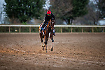 October 30, 2020: Dreamer's Disease, trained by trainer Robertino Diodoro, exercises in preparation for the Breeders' Cup Juvenile at  at Keeneland Racetrack in Lexington, Kentucky on October 30, 2020. Alex Evers/Eclipse Sportswire/Breeders Cup