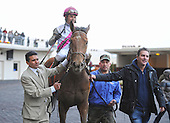 Rudy Rodriguez leads undefeated Vyjack to the Aqueduct winners circle after capturing the Gotham Stakes.