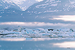 Icebergs, Tracy Arm, Alaska