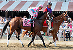 City of Light in the  post parade as Whitmore (no. 3) wins the Forego Stakes (Grade 1), Aug. 25, 2018 at the Saratoga Race Course, Saratoga Springs, NY.  Ridden by  Ricardo Santana, Jr., and trained by Ron Moquett, Whitmore finished 1 1/2 lengths in front of City of Light (No. 8).  (Bruce Dudek/Eclipse Sportswire)