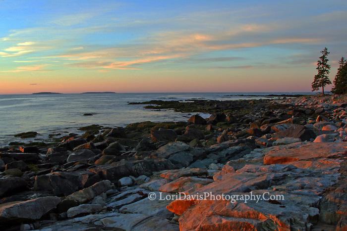 Seawall Sunrise, Acadia  #S2
