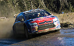 Sebastien Loeb driving his Citroen Total WRT C4 hard through the Resolven stage (SS12)  of the Wales Rally GB in the forests of South Wales this weekend. Loeb has woon the Wales Rally GB by just 2.7 seconds.