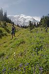 Mount Rainier National Park, day hiker, wildflowers, Moraine Park, Wonderland Trail, Washington State, Pacific Northwest, U.S.A., Gary Parker, released,