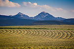 Fresh cut hay in a field at the base of the Anaconda Pintler Mountains near Phillipsburg, Montana