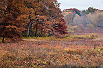 November on the Concord National Wild and Scenic River, Concord, MA, USA