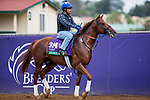 DEL MAR, CA - NOVEMBER 01: Sadler's Joy, owned by Woodslane Farm and trained by Thomas Albertrani, exercises in preparation for Longines Breeders' Cup Turf at Del Mar Thoroughbred Club on November 1, 2017 in Del Mar, California. (Photo by Kazushi Ishida/Eclipse Sportswire/Breeders Cup)