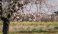 early spring in Mallorca<br /> <br /> 27th Challenge Ciclista Mallorca 2018<br /> Trofeo Campos-Porreres-Felanitx-Ses Salines: 176km