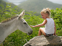 Friendly wild local donkeys that are always curious, cautious and looking for a handout.  <br /> St. John<br /> U.S. Virgin Islands