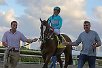 HALLANDALE BEACH, FL - MARCH 04: #4 Wake Forrest with jockey Javier Castellano heads to the winners circle after winning The Mac Diarmida (Grade II) Stakes at Gulfstream Park on March 04, 2017 in Hallandale Beach, Florida. (Photo by Liz Lamont/Eclipse Sportswire/Getty Images)