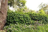 How Green is God's Garden