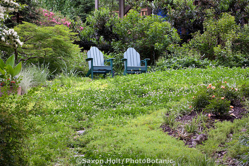 Adirondack chairs in back yard lawn substitute groundcover of white clover and Sedum linare; Susan Harris garden