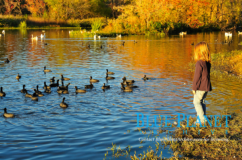 young girl watching American coot birds, Fulica americana, White Rock Lake, freshwater reservoir of Dallas city, Texas, USA, North America (No MR)