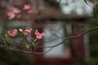 Montclair in Bloom