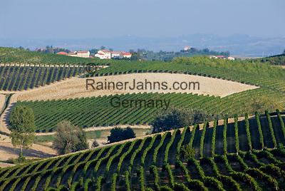 Italien, Piemont, Monferrato: Weinberge bei Vignale Monferrato | Italy, Piedmont, Monferrato: vineyards near Vignale Monferrato
