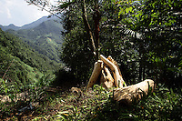 Felled tree in a forest in northern Sichuan Province. Although a logging ban has been in effect since 1998, deforestation still takes place on a local level in the mountains of northern Sichuan. Pingwu County in Sichuan Province, south-west China.