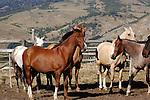 HORSES IN RIO MALLEO