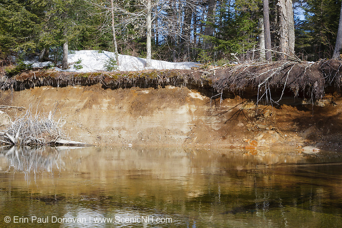 River bank erosion along the Swift River in Albany, New Hampshire USA.