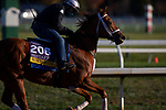 November 2, 2020: Monomoy Girl, trained by trainer Brad Cox, exercises in preparation for the Breeders' Cup Distaff at Keeneland Racetrack in Lexington, Kentucky on November 2, 2020. Carolyn Simancik/Eclipse Sportswire/Breeders Cup