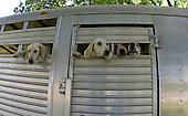 Release the hounds, Nashville, Tenn.
