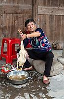 Yubei, Zhejiang, China.  Woman Preparing a Duck for Dinner.